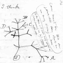 Charles Darwin's 1837 sketch, his first diagram of an evolutionary tree from his First Notebook on Transmutation of Species (1837), on view at the Museum of Natural History in Manhattan.
