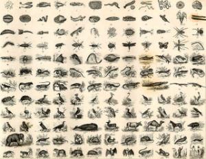 natural-history-chart-4